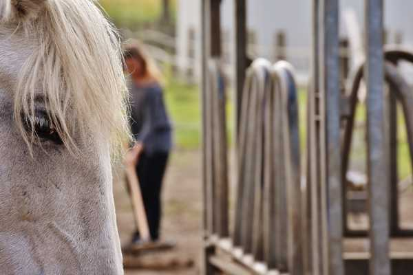 Choroby koni