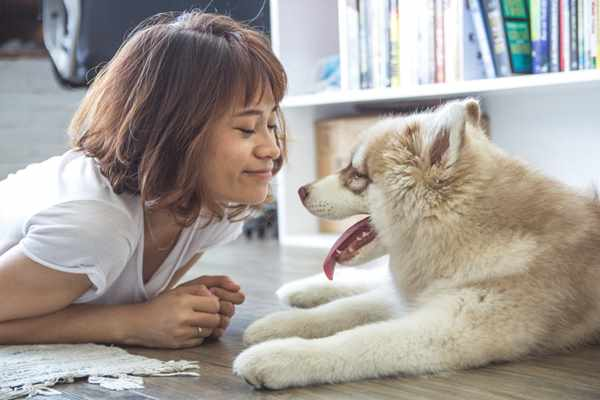Nadpobudliwy pies - co robić?