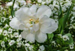 Wyślij wyjątkowy bukiet kwiatów w Krakowie